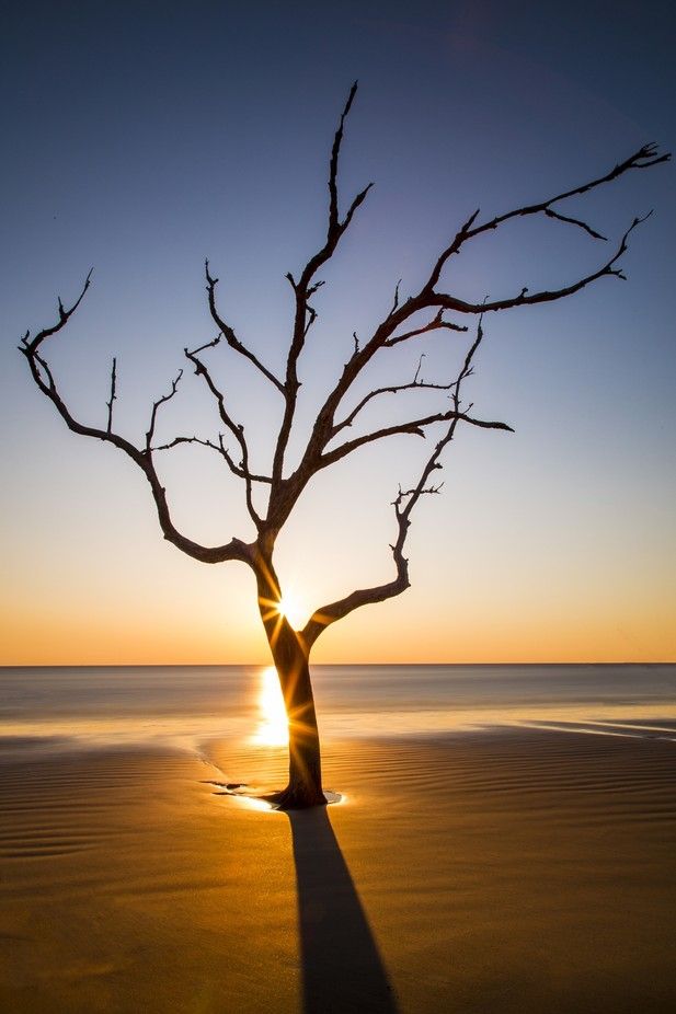 Tree by PaulHenryStudios - Stillness Photo Contest