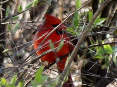 Bird in the bush.