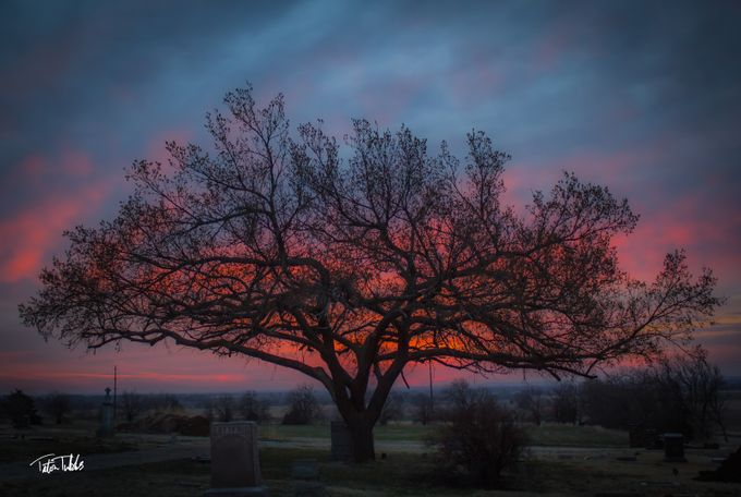 Oak at Sunrise by tatont1979 - Silhouettes Of Trees Photo Contest
