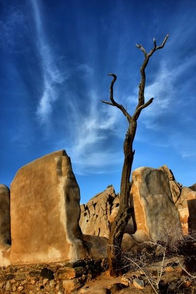 Joshua Tree NP 559