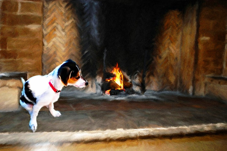 Jack Russell pup enjoying the fire
