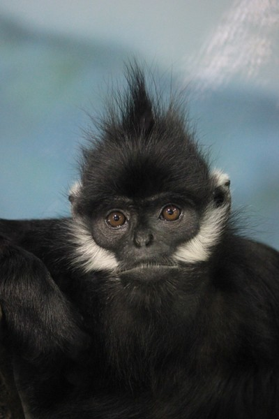Monkeymug