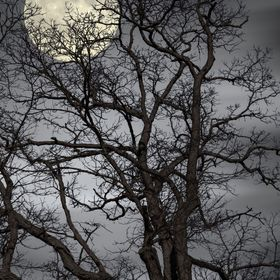 Treetop Full Moon