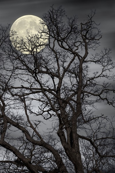Treetop Full Moon