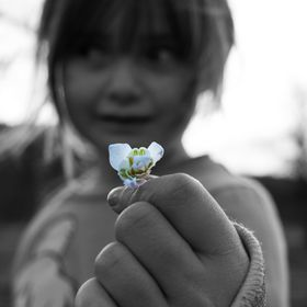 My little girl offers me a small flower during our walk in the countryside in Fife, Scotland.