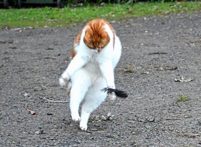 Dancing Archie
