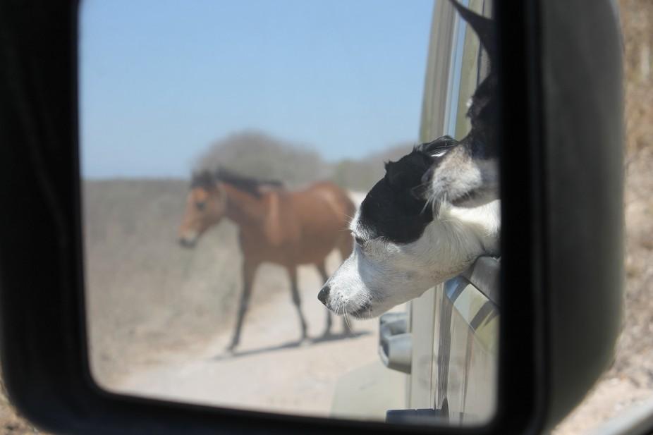 caballo y perros