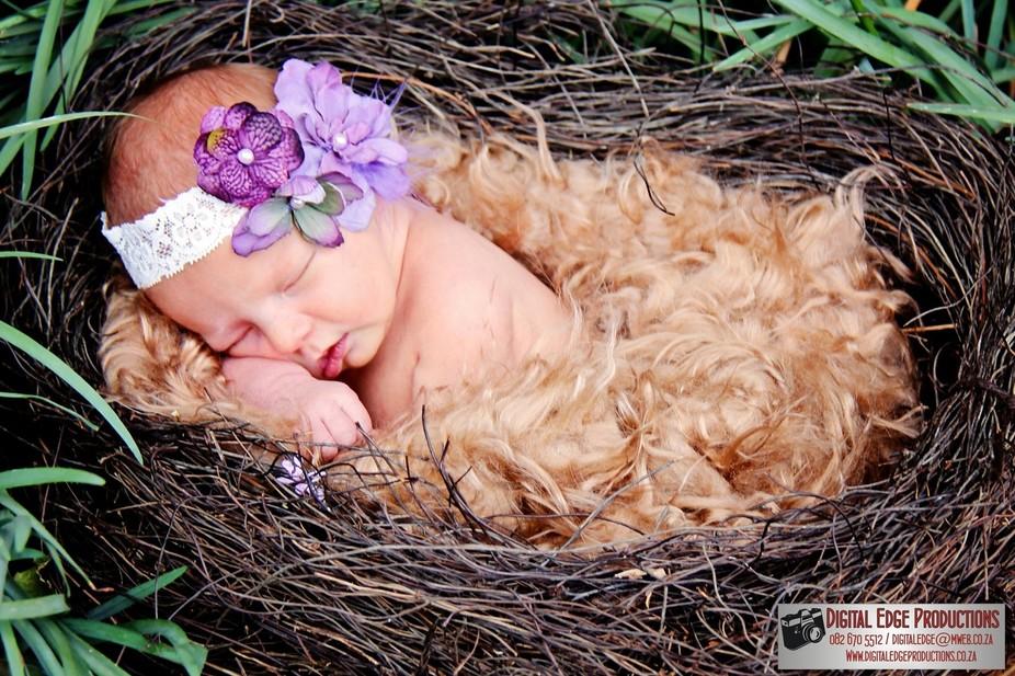 Baby in Nest