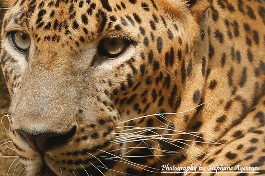 Wild close up