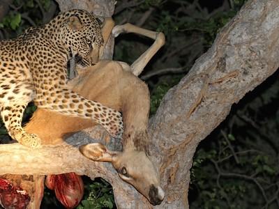 Leopard Kill © Brian Basson 2014