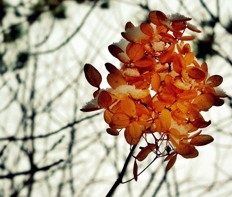 I\'ve taken many many pictures of this tree in my backyard. No matter what season it is I feel lik...