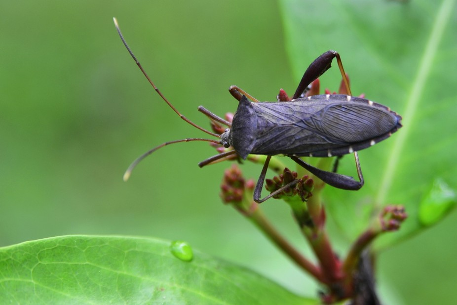 I took this photo the morning, in the gardens around the campus. it was dwelling insect on a leaf...