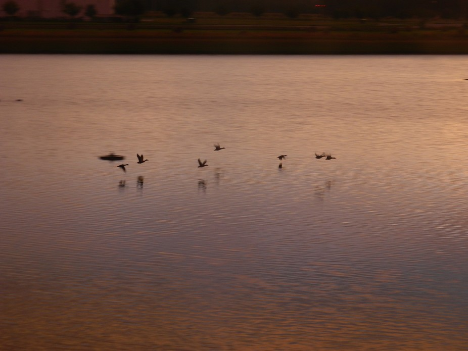 Some ducks flying over a lake