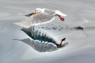 Seagulls Mirror