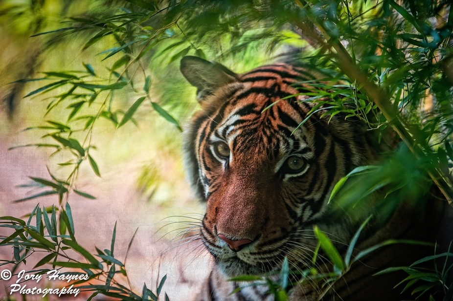 Up close with a tiger