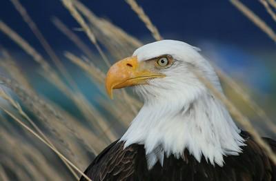 Freedoms Symbol