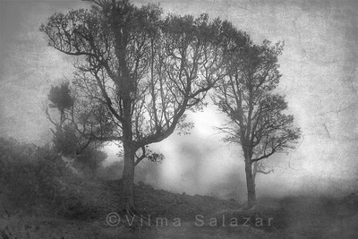 Neblina en Pacaya