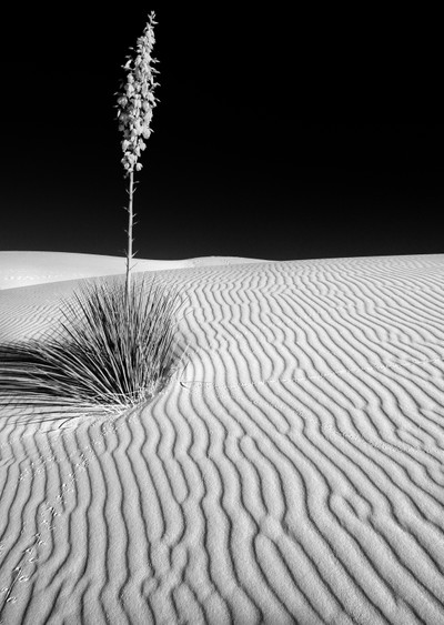 Yucca it up at White Sands