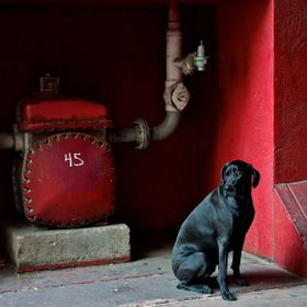 Black dog against a red wall in a alley