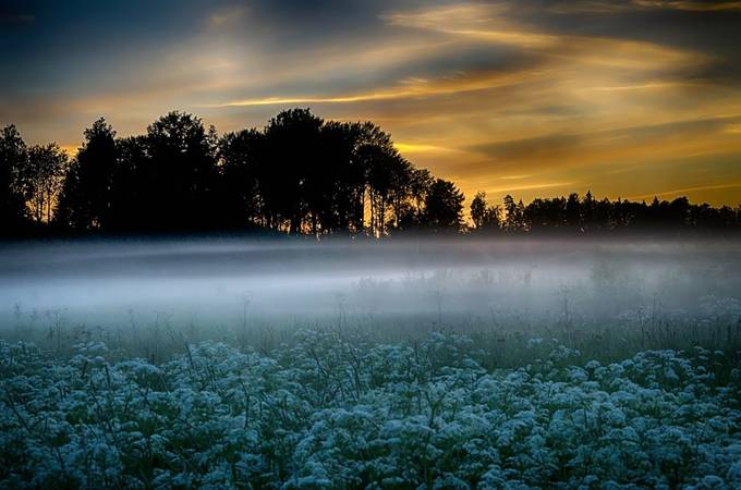 misty meadow by AlexanderArntsen - Magical Light Photo Contest