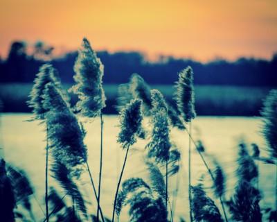 Sunset on the Marsh 2