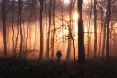 Stand Alone Photo Contest Finalists