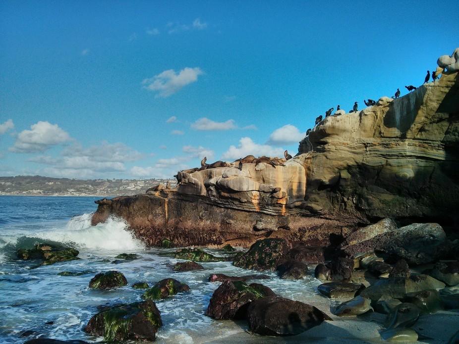 Coast Life