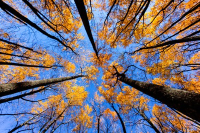 Trees in Shenandoah National Park During the Fall