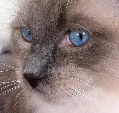 pablo ole blu eyes