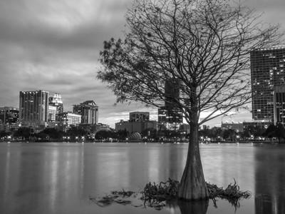 Loney Tree