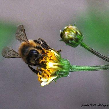 Bee 6
