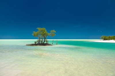 A lonely mangrove tree in a blue and green caribbean sea.