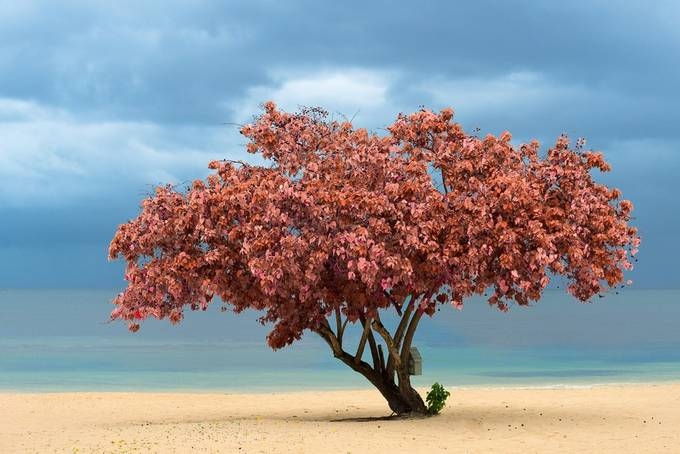 Paradise tree by AlejandroFerrand - A Lonely Tree Photo Contest