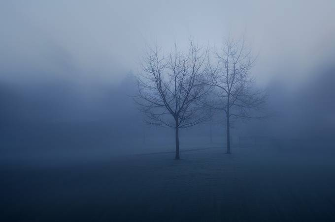Lonely by dashaherman - Silhouettes Of Trees Photo Contest
