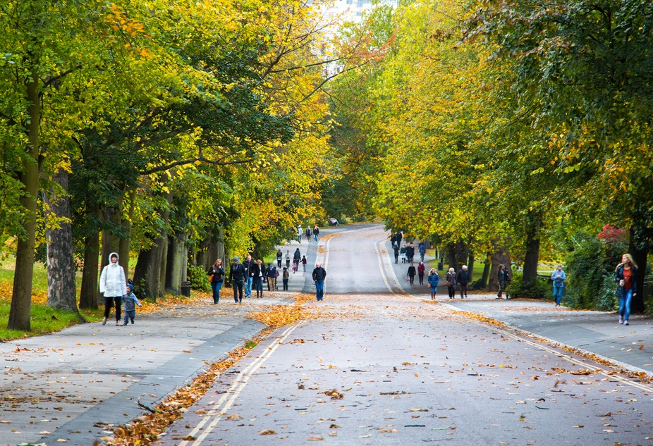 autumn Landscape in a road into the Greenwich park