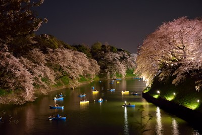 Boating around the illuminated blooming Cherry trees..