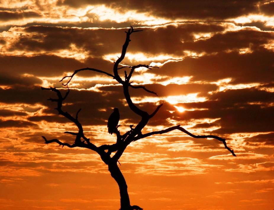 Sunset in the Chobe NP Botswana