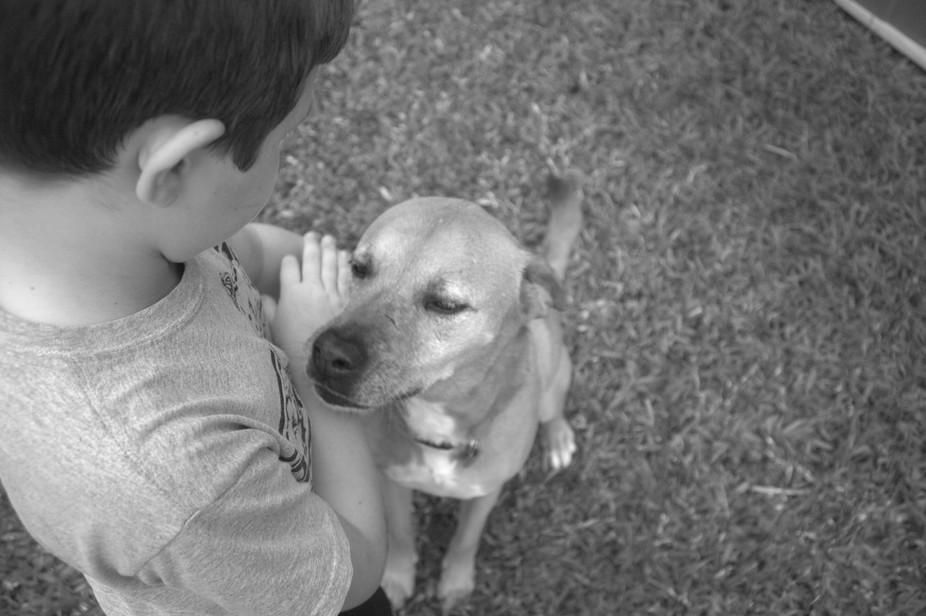 The dog enjoying some loving.