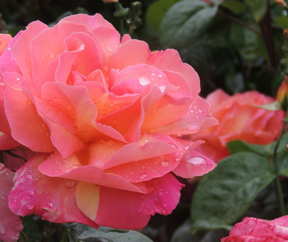 Flowers in the rain...