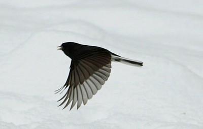 Wings of Winter....  al fritz