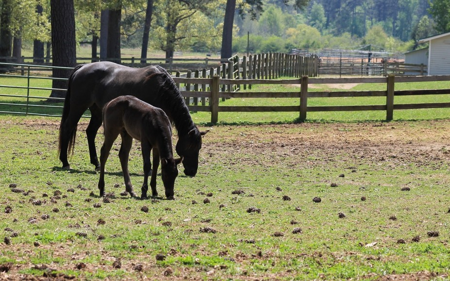 How precious. A momma and her baby. Sweet horses! A farm near Rome, Georgia. Spring foal and mare...