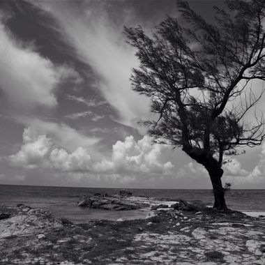 Tree, island, ocean and clouds.