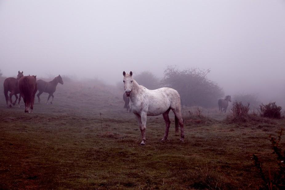 White Horse in Mist