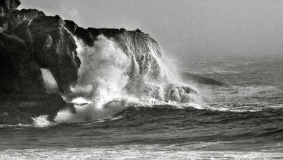 Ocean Gone Wild