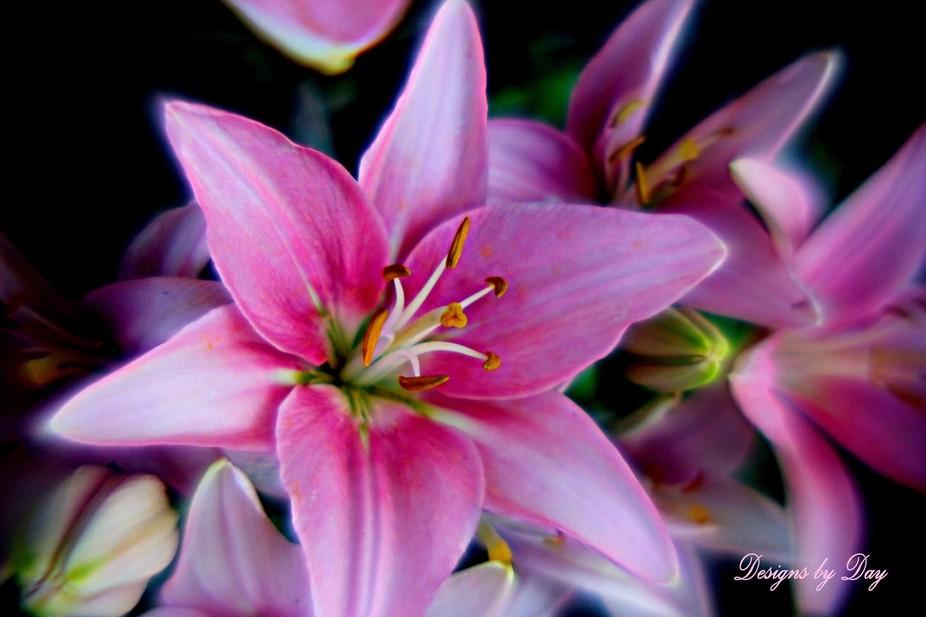 petal prize 3