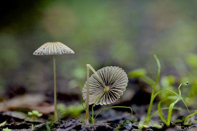 Tiny Little Teeny Weeny Mushrooms