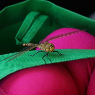 Dragon Fly 2
