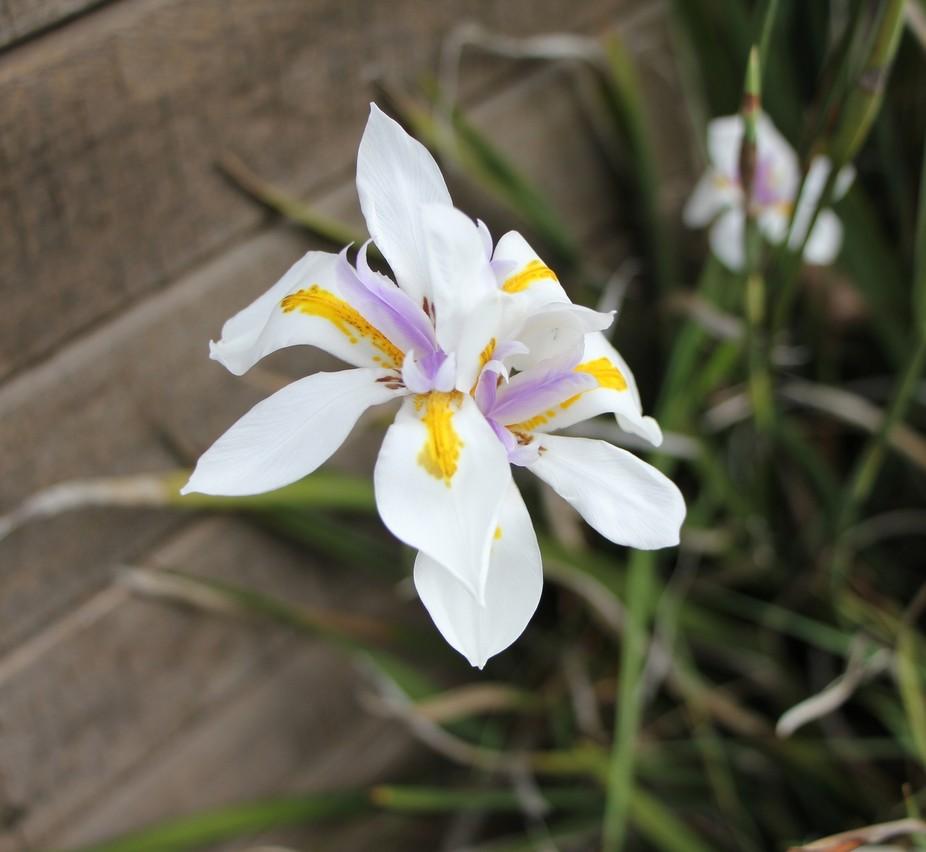 Wild Flower Crib Point