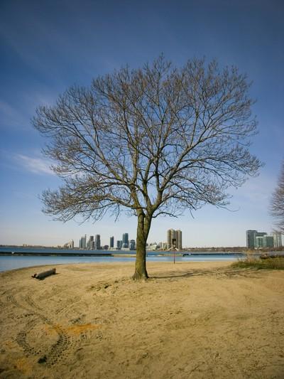 Sunnydale Boardwalk - Lonely tree
