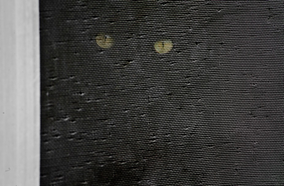 black cat screen window